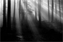 Natur-Light-Show
