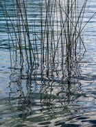 Natur- Malerei am See.