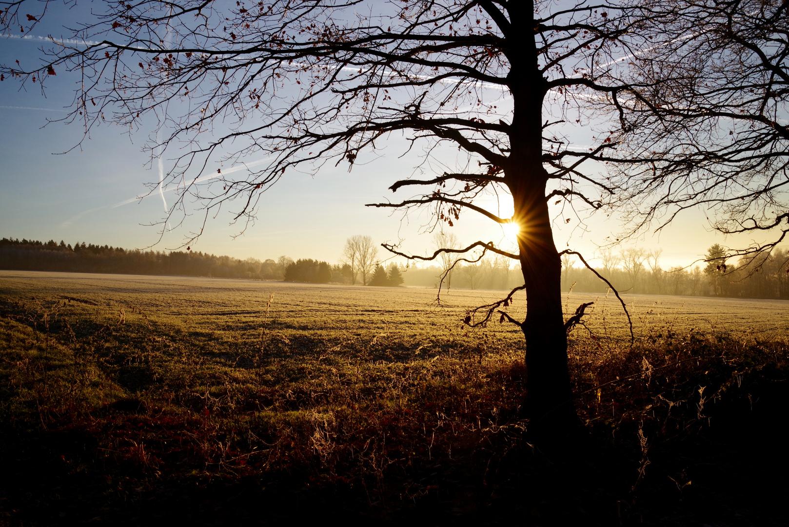 Natur nachmittags um 16.04 Uhr