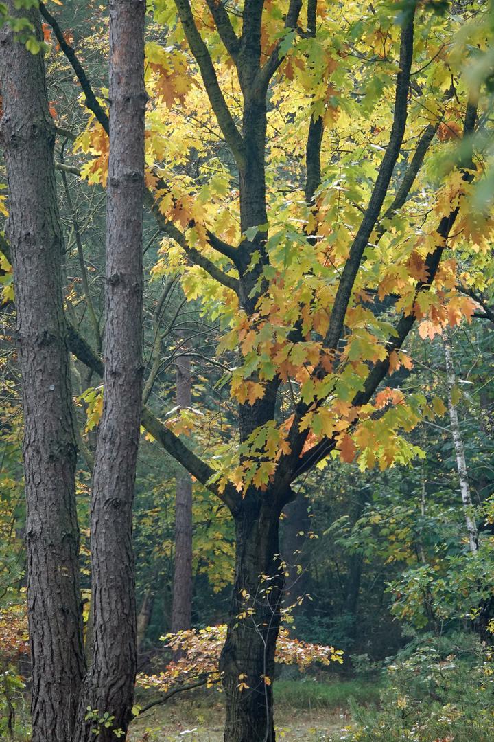 Natur pur - gegen den Coronablues