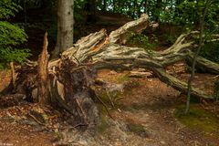 Natur Pur  – Insel Vilm (2)