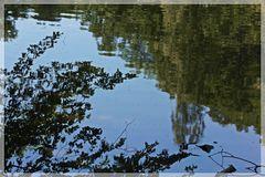 Natur über und im Wasser