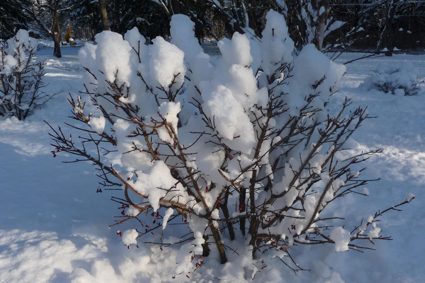 Natur und Schnee