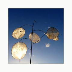 Natur-Wind-Spiel