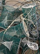 'Natura morta' - die Fische leben noch - i pesci ancora vivi