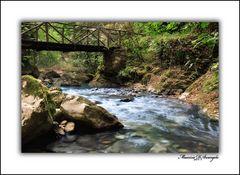 Natura.....che pace!!!!
