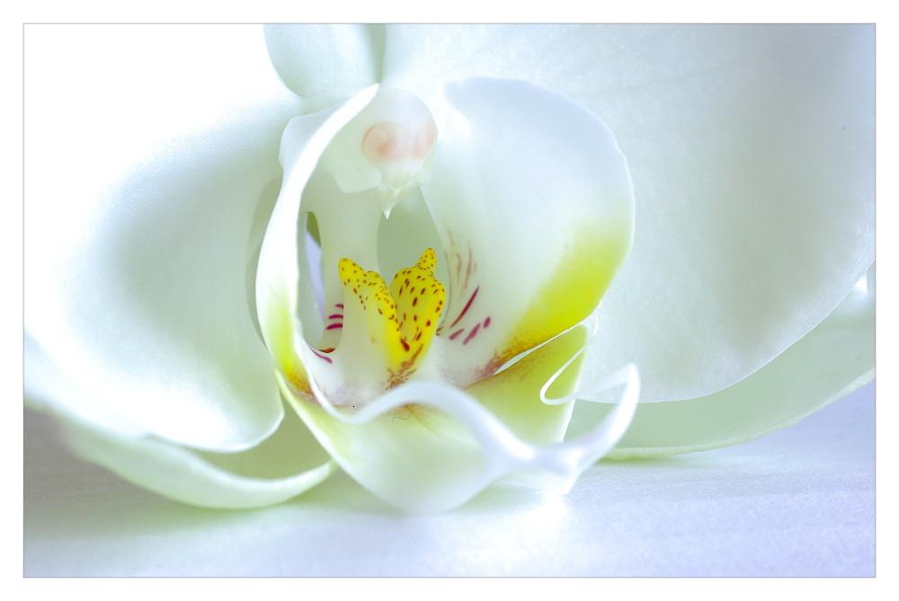 ... natural beauty ... (2)