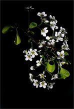 Natural Beautys (5)