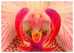 Natural birdcage ;-)