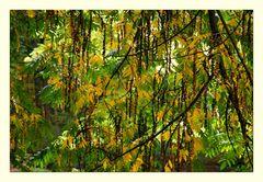 Natural curtain - Naturvorhang