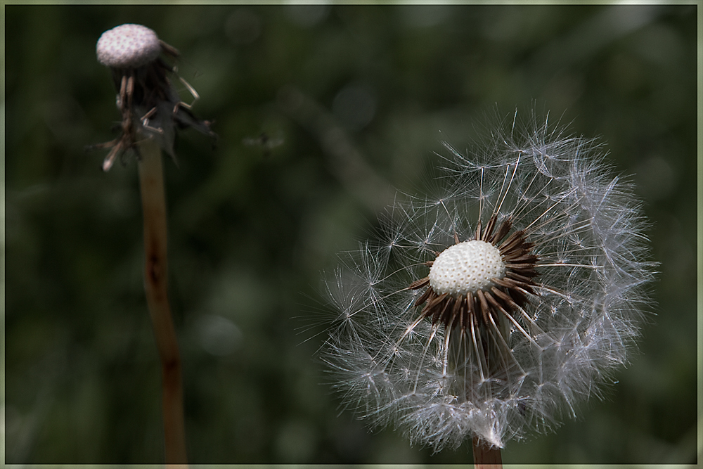 Natural Emotions (4) - Der Neubeginn