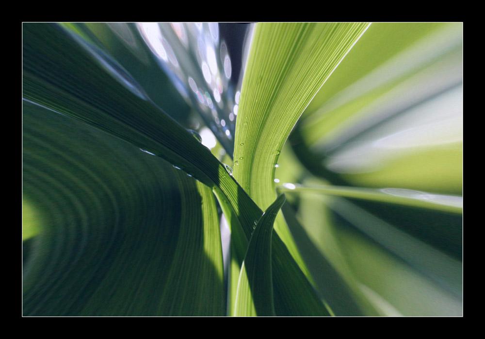 Natural Flow Foto Bild Natur Pflanzen Youth Bilder Auf