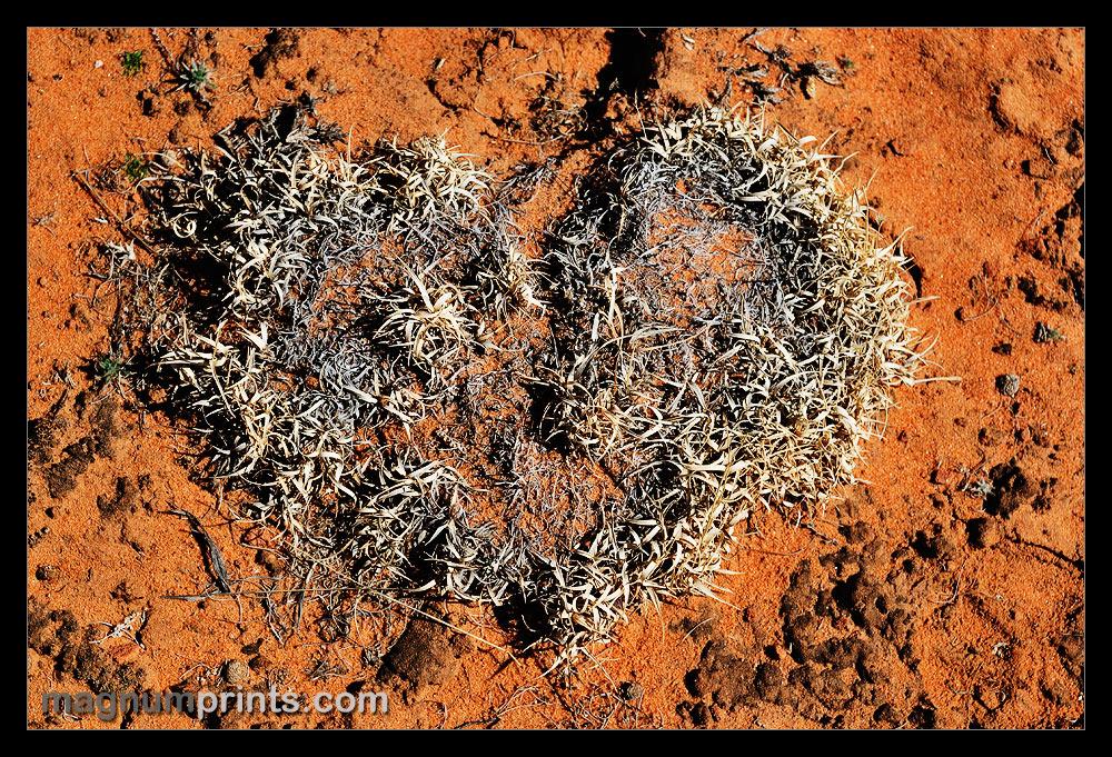 ..:: NATURAL HEART ::..