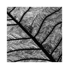 natural structure - VI -