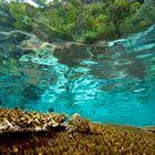 -Natural Swimming Pool-
