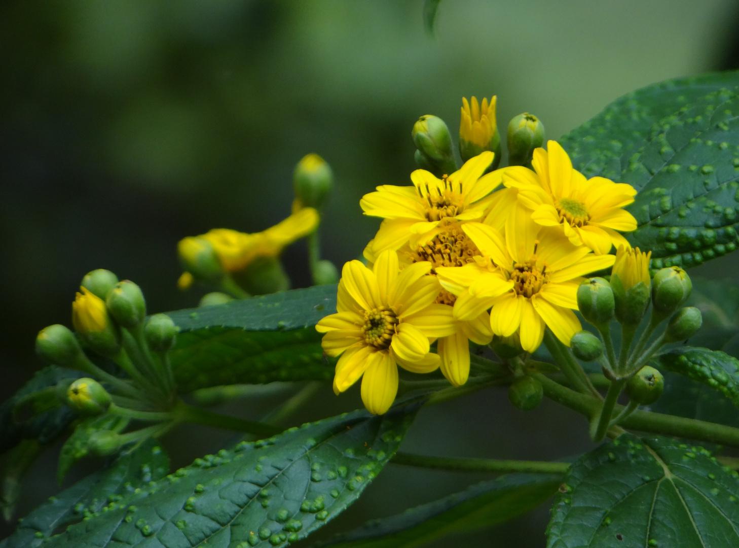 Naturaleza en amarillo