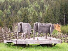 Naturbelassene Kühe