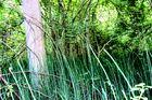 Naturbelassene Landschaft in den Rheinauen