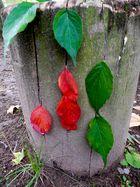 nature art 001