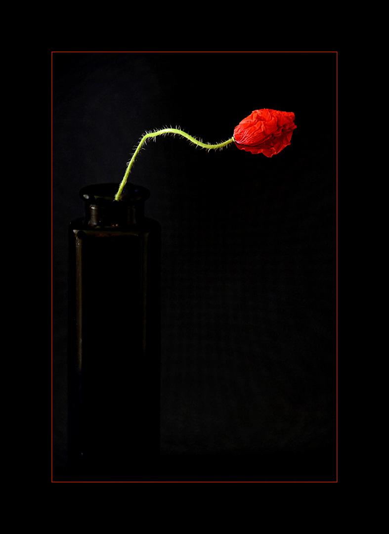 nature in black - rouge et noir