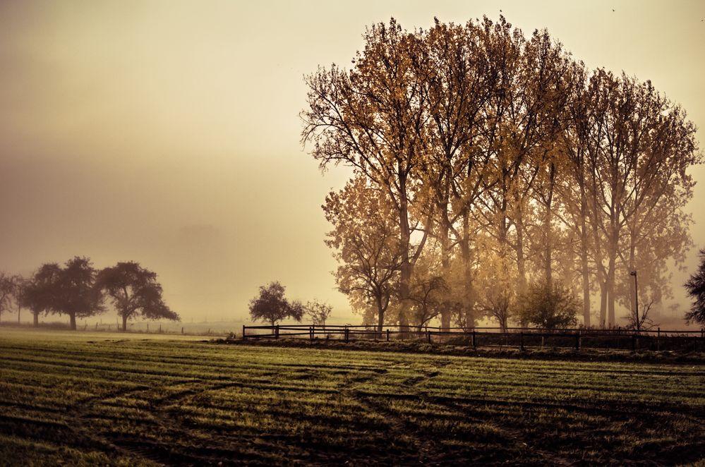 nature in fog von Heiphi-Photography