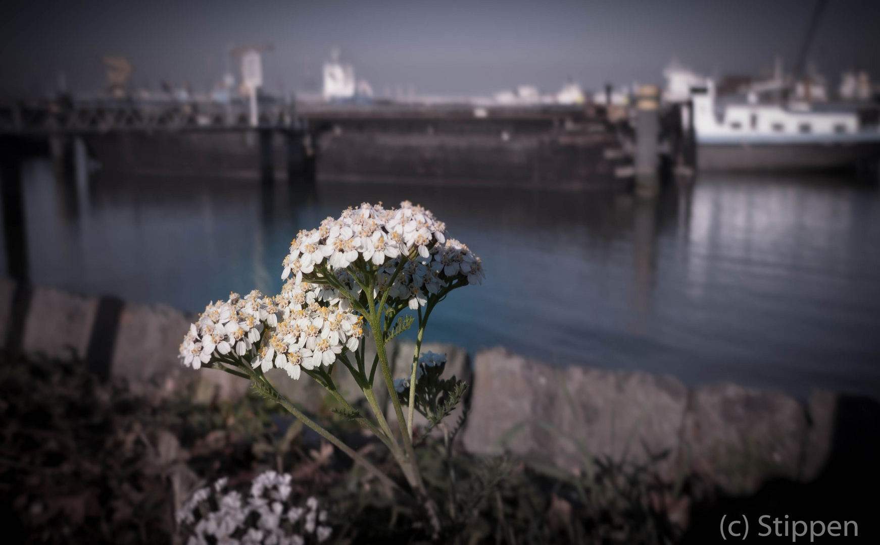 Nature in the Rotterdam harbour
