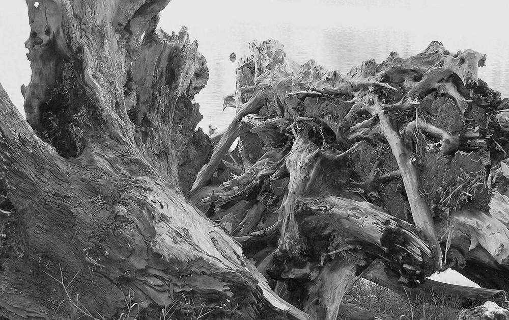 Nature Morte ...