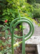 NatURe Of ´n oNion