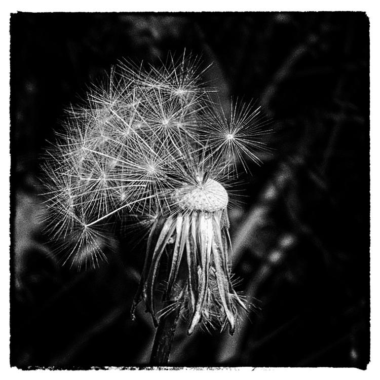 nature sparklers