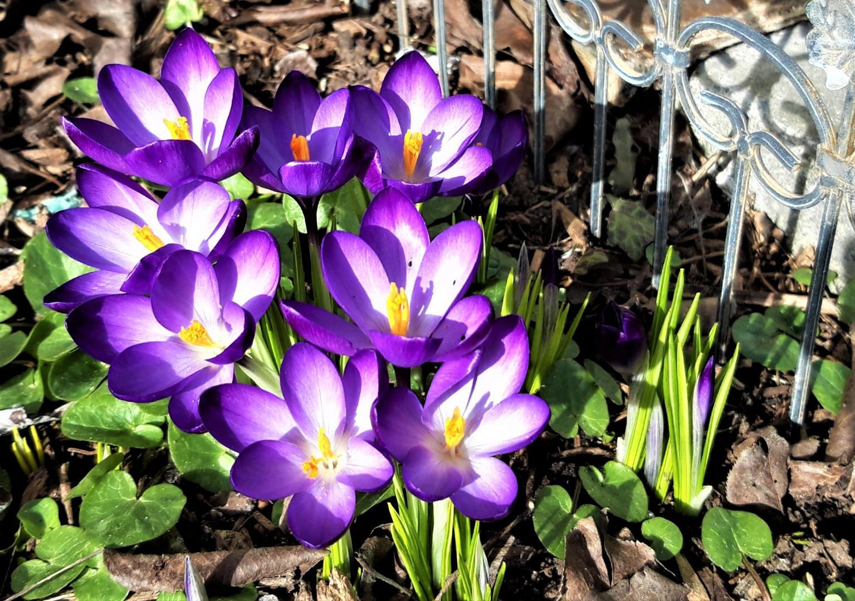 Naturerwachen im Garten