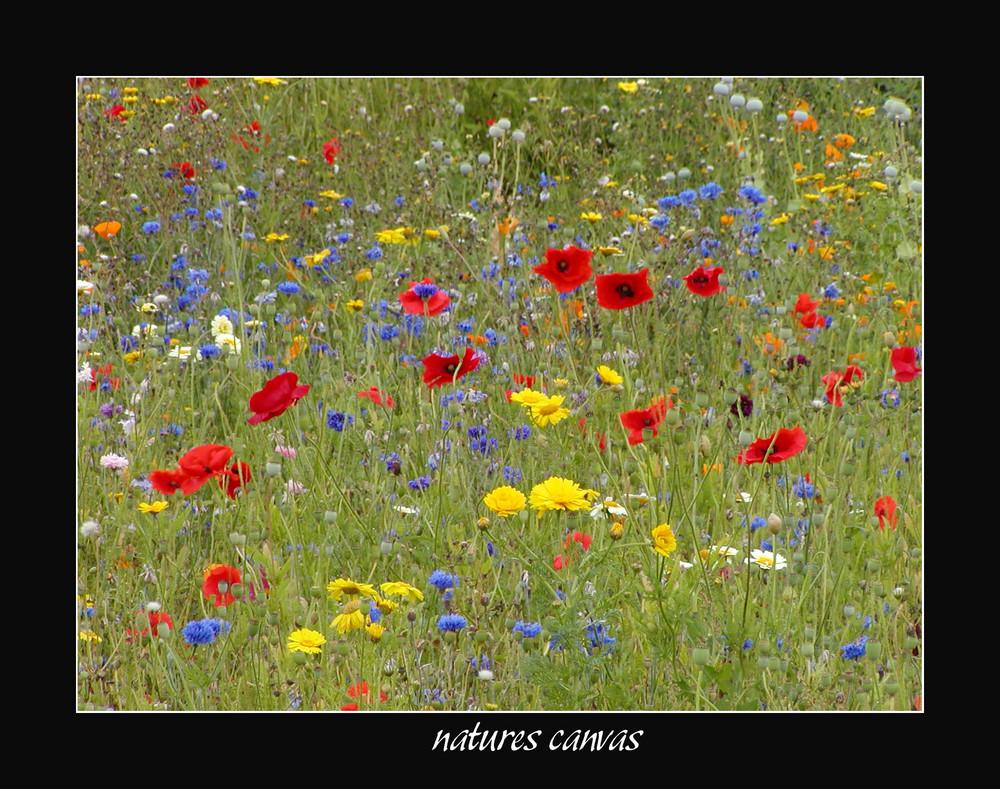 Natures Canvas