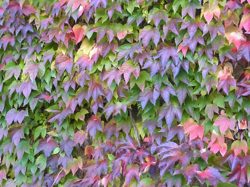 Natures Colours.