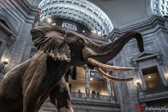 Naturhistorisches Museum DC