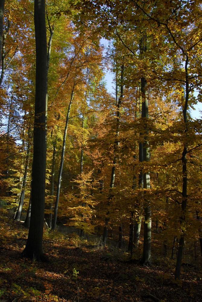 Naturnaher Buchenwald im Ziegelrodaer Forst