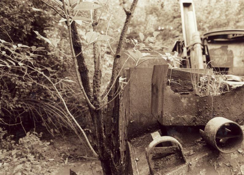 Naturpanzer 02