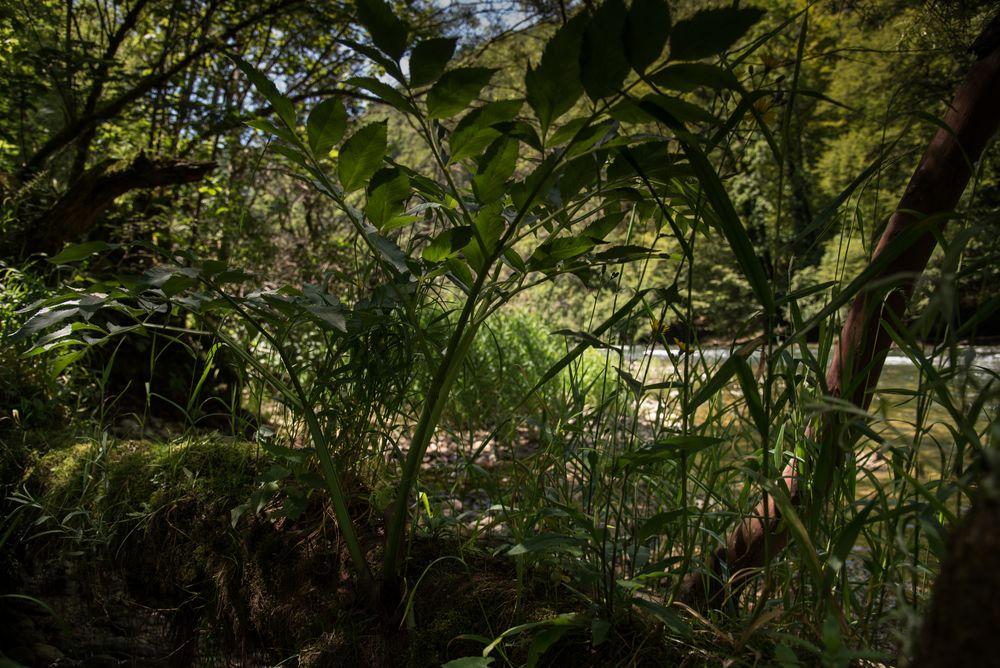 Naturparadies am Doubs