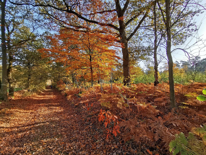 Naturpark Hohe Mark, Haltern