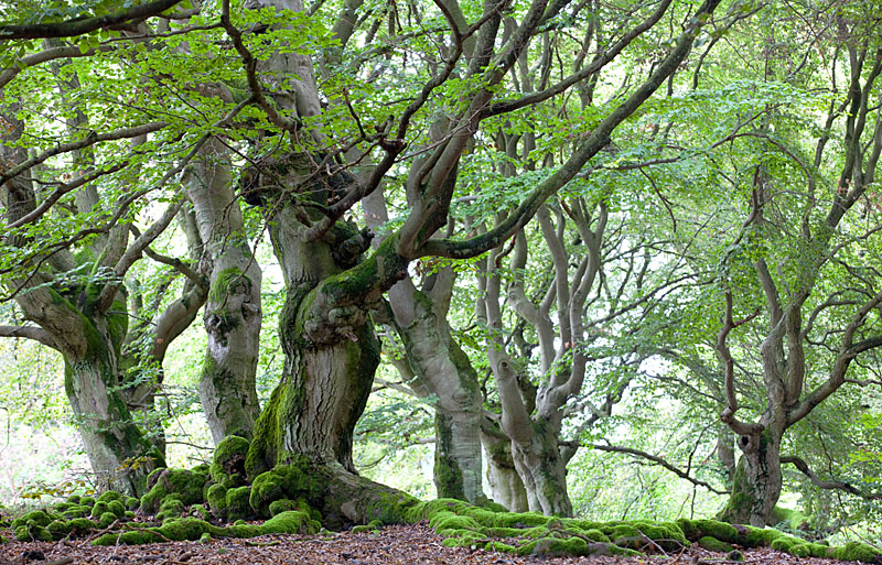 Naturpark Kellerwald-Edersee - Naturdenkmal Halloh