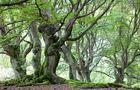 Naturpark Kellerwald-Edersee - Naturdenkmal Halloh von Niederrhein Foto