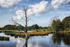 Naturpark Maas-Schwalm-Nette ....