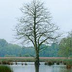 Naturpark Schwalm-Nette   De Wittsee - Landschaftsfotografie