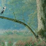 Naturpark-Schwalm-Nette - Graureiher (Ardea cinerea)