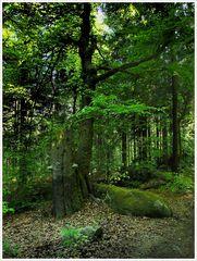 Naturreservat Waldstein