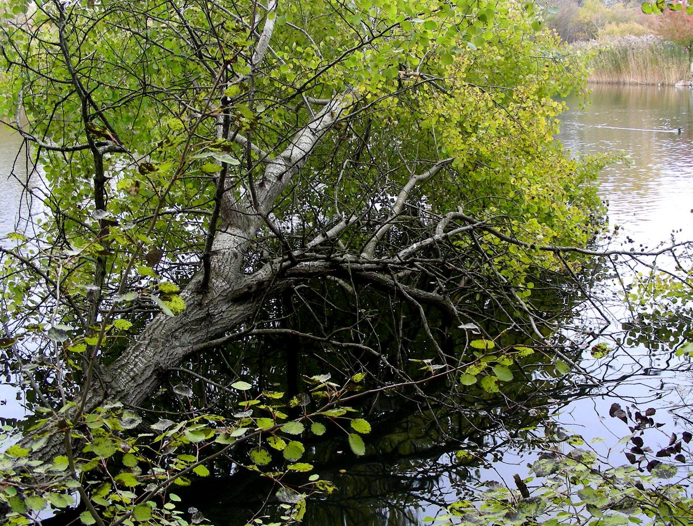 Naturschutz - Gebiet