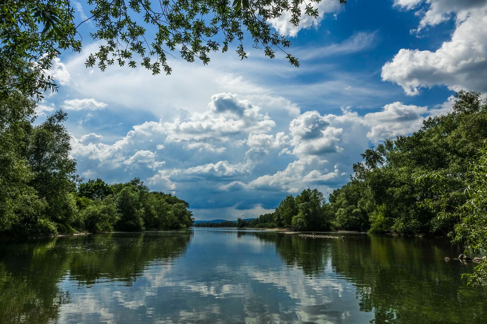 Naturschutzgebiet am Rhein