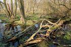 Naturschutzgebiet auf der Halbinsel Gnitz 7