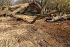 Naturschutzgebiet auf der Halbinsel Gnitz 8