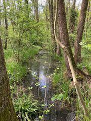 Naturschutzgebiet Eller Forst
