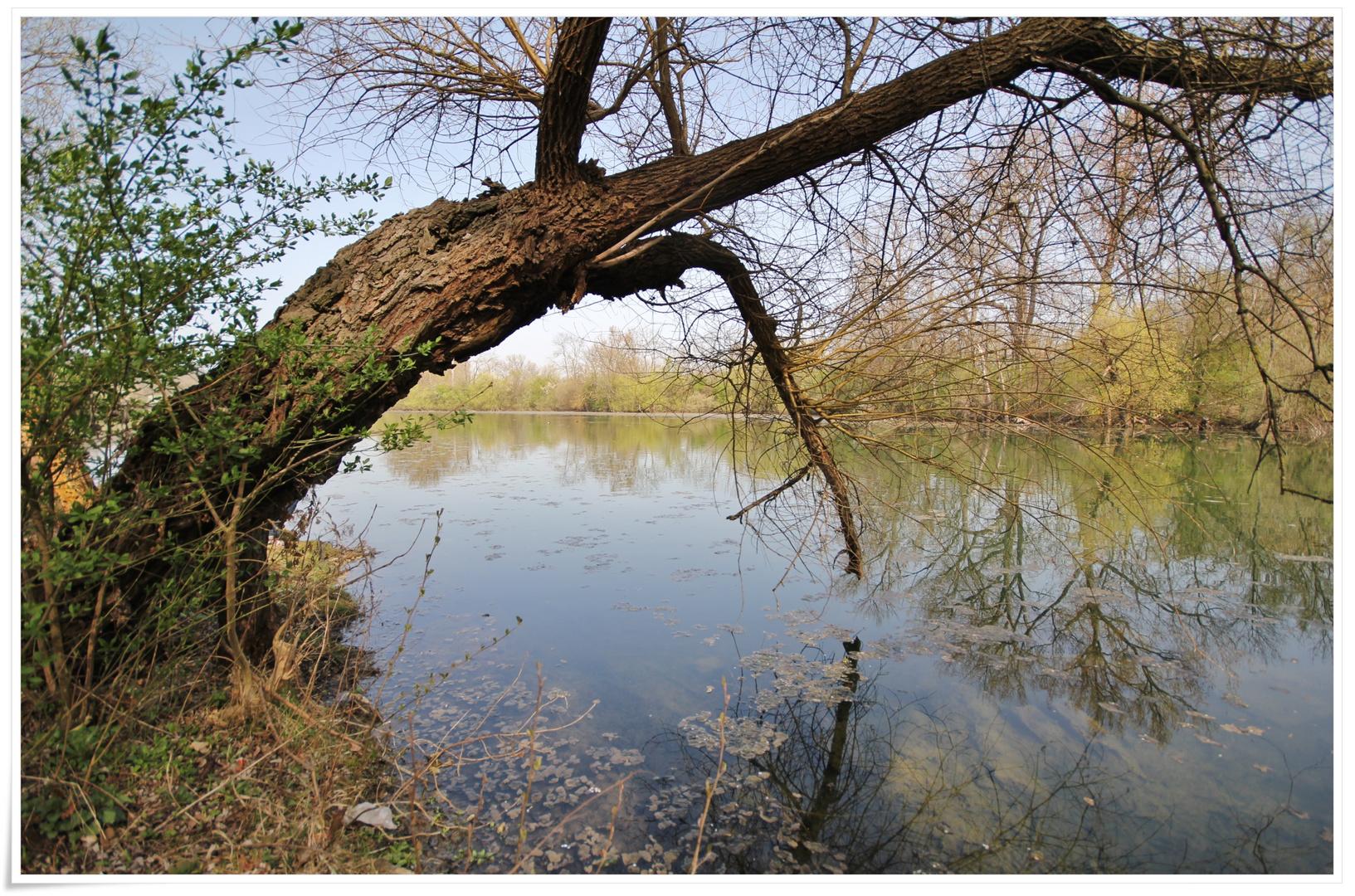 Naturschutzgebiet Grienwiesen