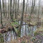 Naturschutzgebiet Ohligser Heide